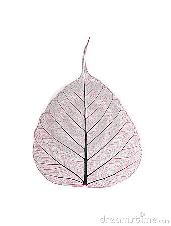 Decorative skeleton leaf