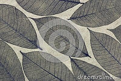 Decorative skeleton leaf