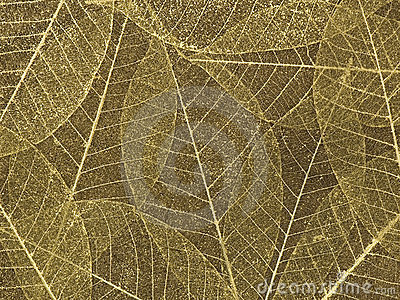 Decorative skeleton leaf background