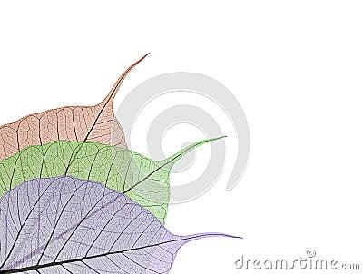 Decorative skeleton leaves