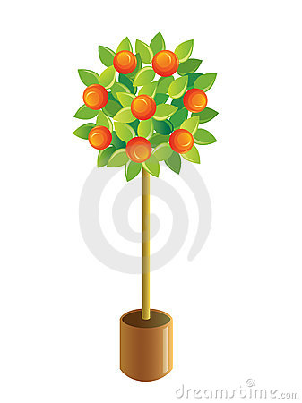 Decorative tangerine-tree.