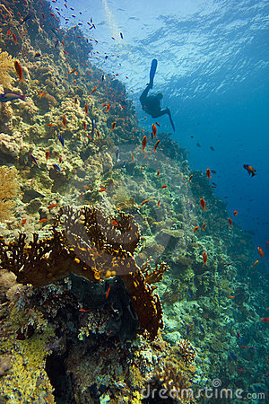 Deep coral-reef with blue water & diver