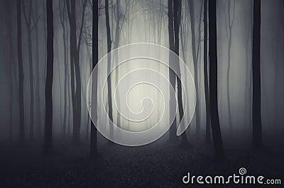 Deep dark woods on Halloween night Stock Photo