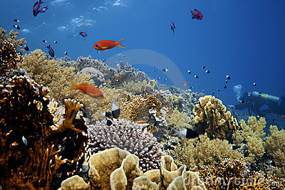 Deep Coral-Reef with fishes around