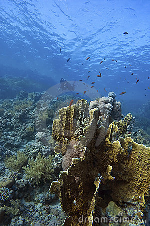 Deep Doral-Reef with fishes around