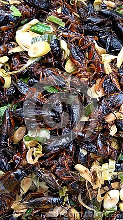 deep fried cricket
