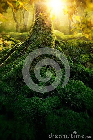 Free Deep Magic Forest Royalty Free Stock Photo - 119355265