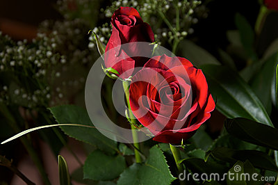 Deep red roses with baby breath