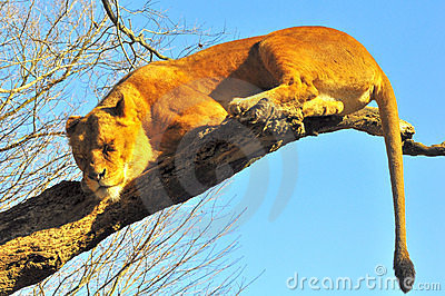 Deep sleep on a tree