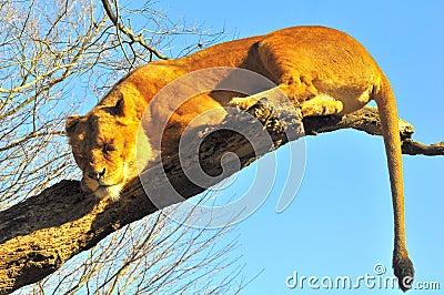 Deep sleep on a tree