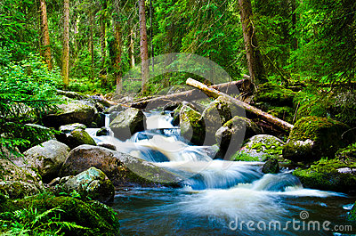 Deep Wood Stock Photos - Image: 26427293