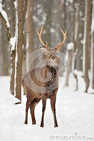 Free Deer Stock Image - 29396701
