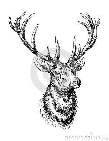 Free Deer Royalty Free Stock Photos - 30136198