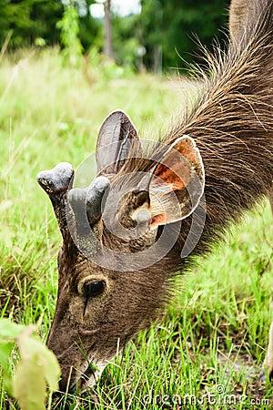 Free Deer Royalty Free Stock Image - 58202056
