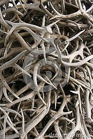 Deer Antlers Royalty Free Stock Images Image 13774089