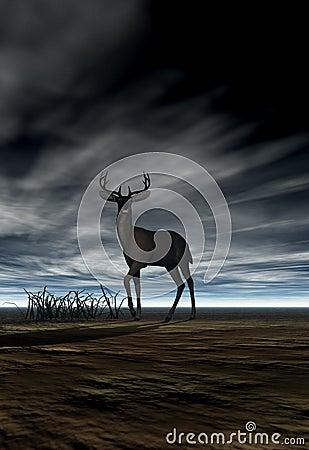 Free Deer (Buck) Stock Image - 2222111