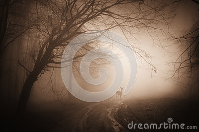 Deer in a creepy dark forest with fog