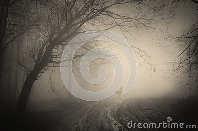 Deer in a dark forest with fog