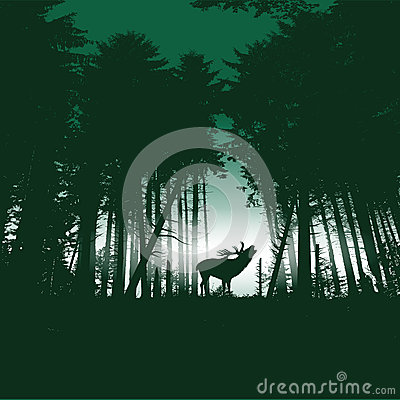 Deer in the forest at night