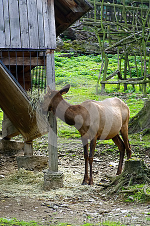 Deer, friendly animals at the Prague Zoo.