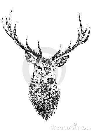 Free Deer Head,  Royalty Free Stock Image - 16437976
