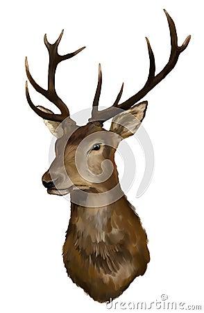 Free Deer Head Royalty Free Stock Images - 24417849