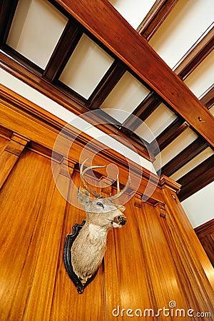 Deer head in castle