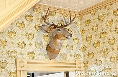 Deer head trophy on wall