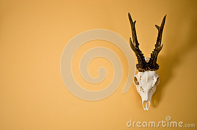 Deer horns trophy on wall