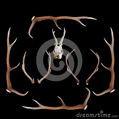 Deer hunting trophies on dark background