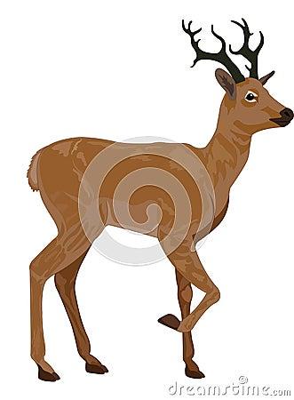 Free Deer, Illustration Royalty Free Stock Image - 25967786