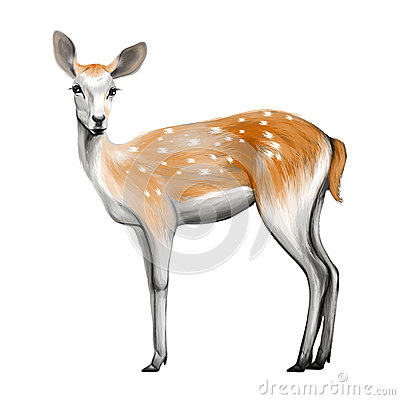 Deer isolated