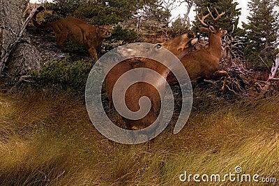 Deer Panic-Horiz