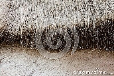 Deer�s fur texture