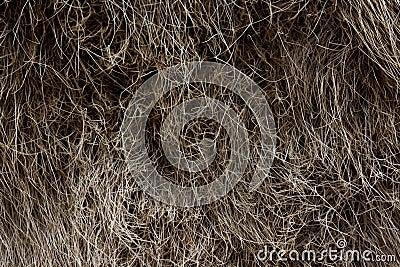 Deer s fur texture
