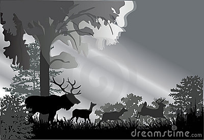Deer silhouettes in grey forest