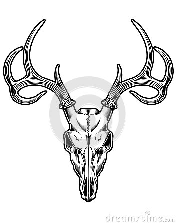 Free Deer Skull Vector Royalty Free Stock Photography - 33684777