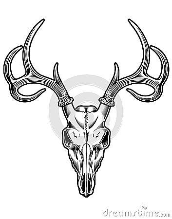 Antlers likewise Hirsch Tier Silhouetten 16053053 as well Deer hoof as well Deer Skull Pictures further Male Du Cerf Hemione. on whitetail deer head clip art