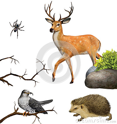 Free Deer, Spider. Hedgehog, Cuckoo On A Tree Branches. Stock Images - 29744704