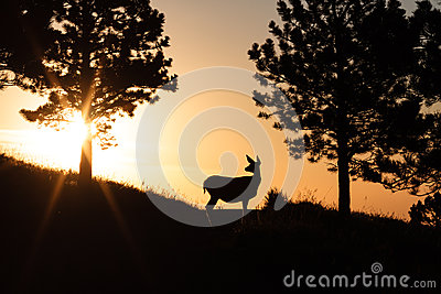 Deer at Sunrise
