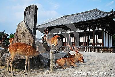 Deers at temple