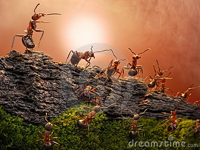 Defence of great wall, ants wars