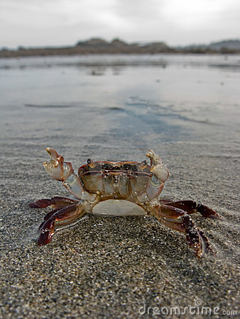 Defensive crab
