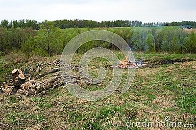 Deforestation.