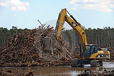Deforestation Editorial Stock Image