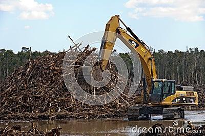 Deforestation Editorial Stock Image