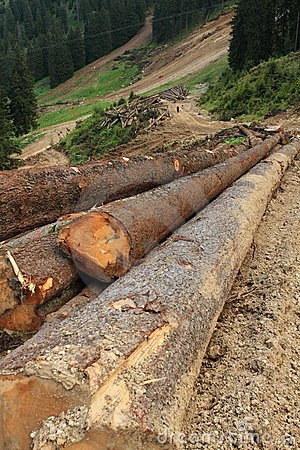 Free Deforestation Royalty Free Stock Photography - 19826877