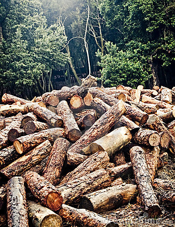 Free Deforestation Royalty Free Stock Photo - 4865235