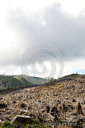Free Deforestation Royalty Free Stock Image - 95404106