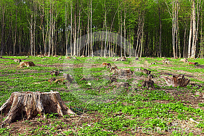 Deforestation of beautiful pristine forest areas
